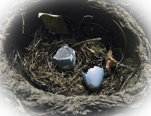 How to Avoid Empty Nest Syndrome